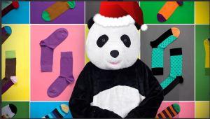 panda picture.