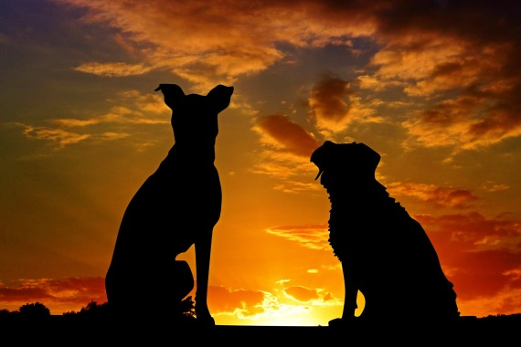dogs-2222801_1920