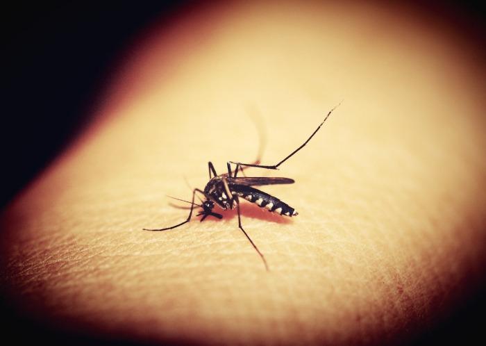 mosquitoe-1548975_1280